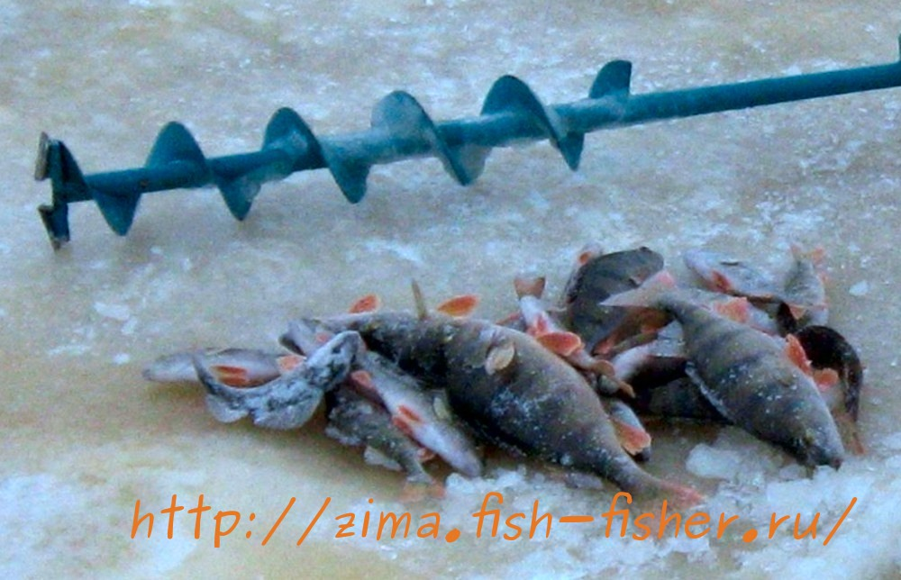 Зимняя рыбалка. Ловля окуня на балансир
