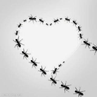 Inilah Alasan Mengapa Semut Berjalan Berbaris