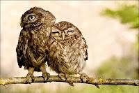 cute birdz