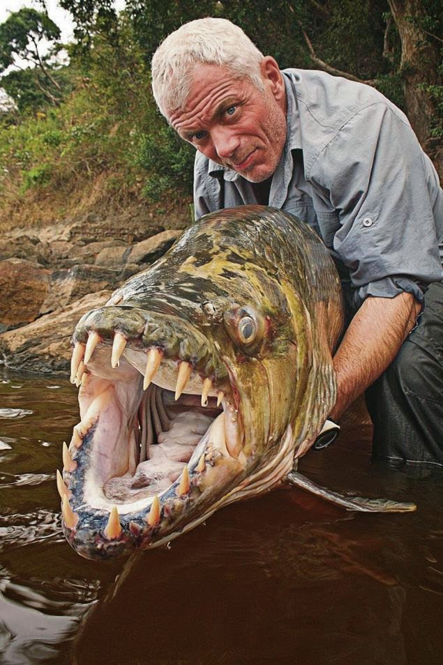 tarpon fly fishing river monsters tv