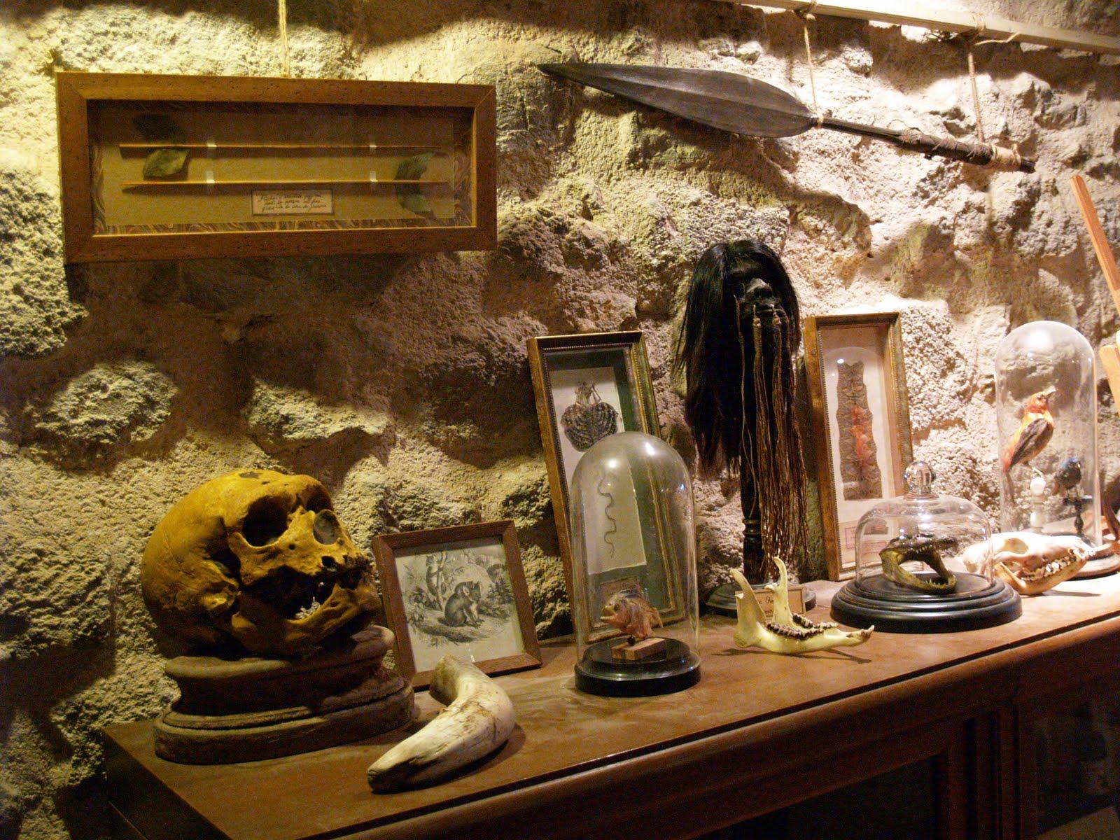 Mon cabinet de curiosit s par camille renversade mon cabinet de curiosit s la tour d 39 aigues - Le cabinet de curiosites ...