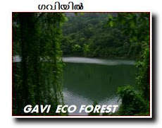 GAVI - THE MISTY ECO STATION  NEAR THEKKADY