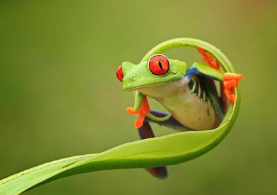 Aquí es donde juegan las ranas by  Suresh Dangi