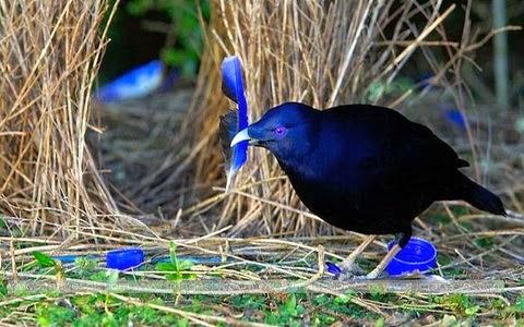 Alguns ninhos pesam quase uma tonelada.
