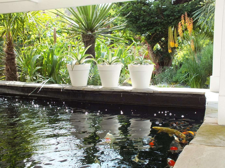 Alternative Eden Exotic Garden The Koi Pond Planting Details
