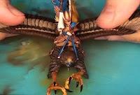 Warhammer Príncipe Alto Elfo montado en grifo