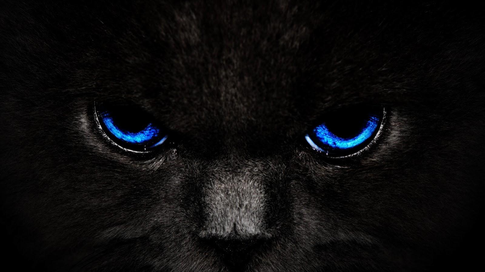 black cats hd wallpapers