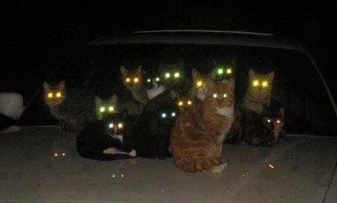 Cat's eyes glowing at night