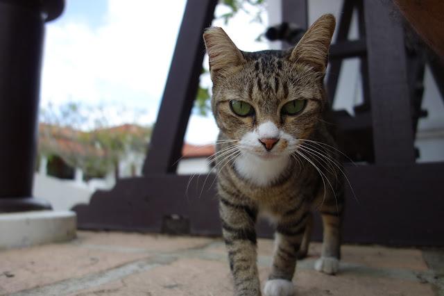 Cat (Langkawi, Malaysia)