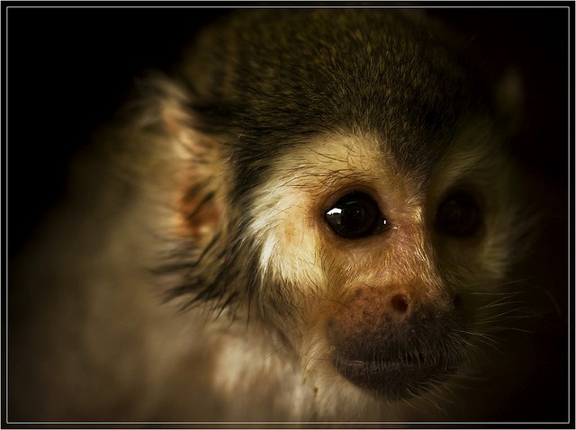 pictures of cute monkeys