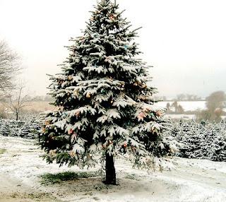 Romantic Christmas Tree full of snow