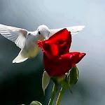 mil palavras ausentes, o amor é eterno desafio