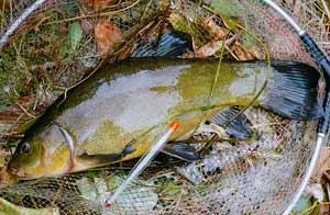 Ловля линя осенью на реке
