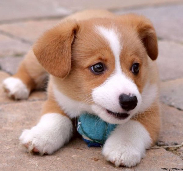 cute puppy picture - photo #26