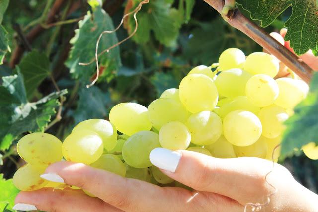 green-grapes-from-our-garden   www.mountaintopchef.blogspot.com