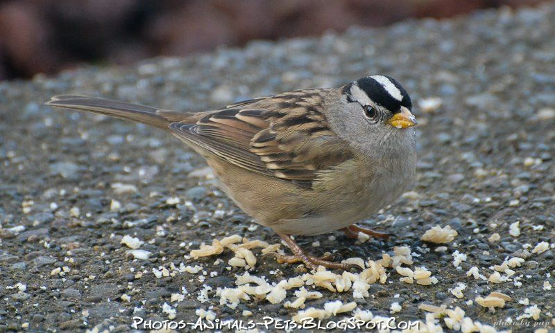 http://4.bp.blogspot.com/-apWMDw_XjV8/Tt-boZKF5oI/AAAAAAAACok/QeX_6c2ddlg/s1600/sparrow%2Bbirds.jpg