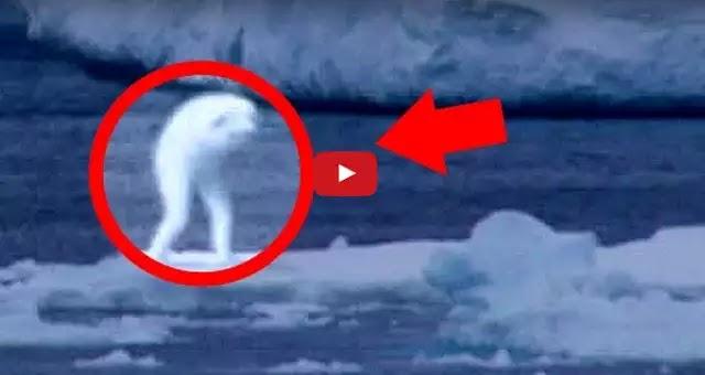 Τα πιο παράξενα πλάσματα που έχουν παρατηρηθεί ποτέ [Βίντεο]
