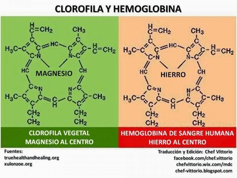 Bazar de la Salud: Clorofila Líquida la hemoglobina verde contra la ...