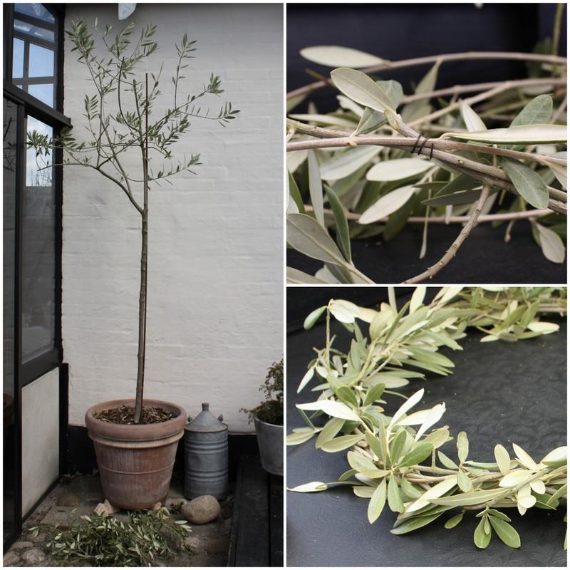 Oliventræ, olivengrene og olivenkrans