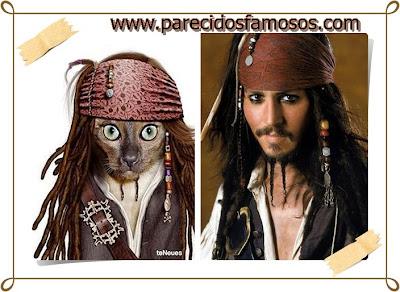 gato loco con  Jack Sparrow