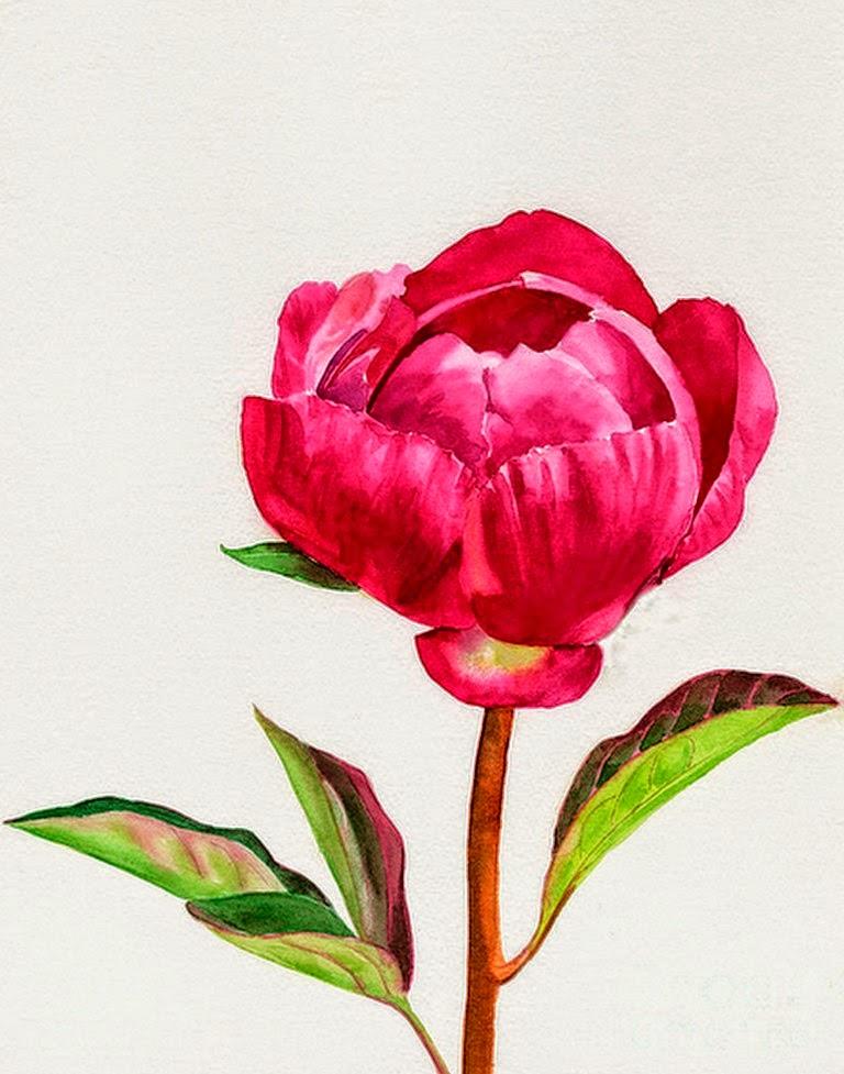 begonias-pintura-realista-acuarela
