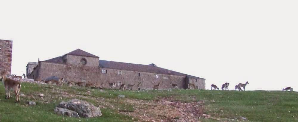 bouquetins et monastère de la Peña de Francia