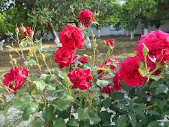 """2015""""Θα σου κρατώ δροσερή τη χλόη, εκεί οπού τα λουλούδια δοξολογούν τα πόδια σου..."""" Νότα Κυμοθόη."""