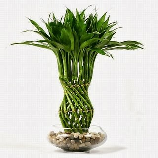 Top Five Most Beautiful Indoor Plants