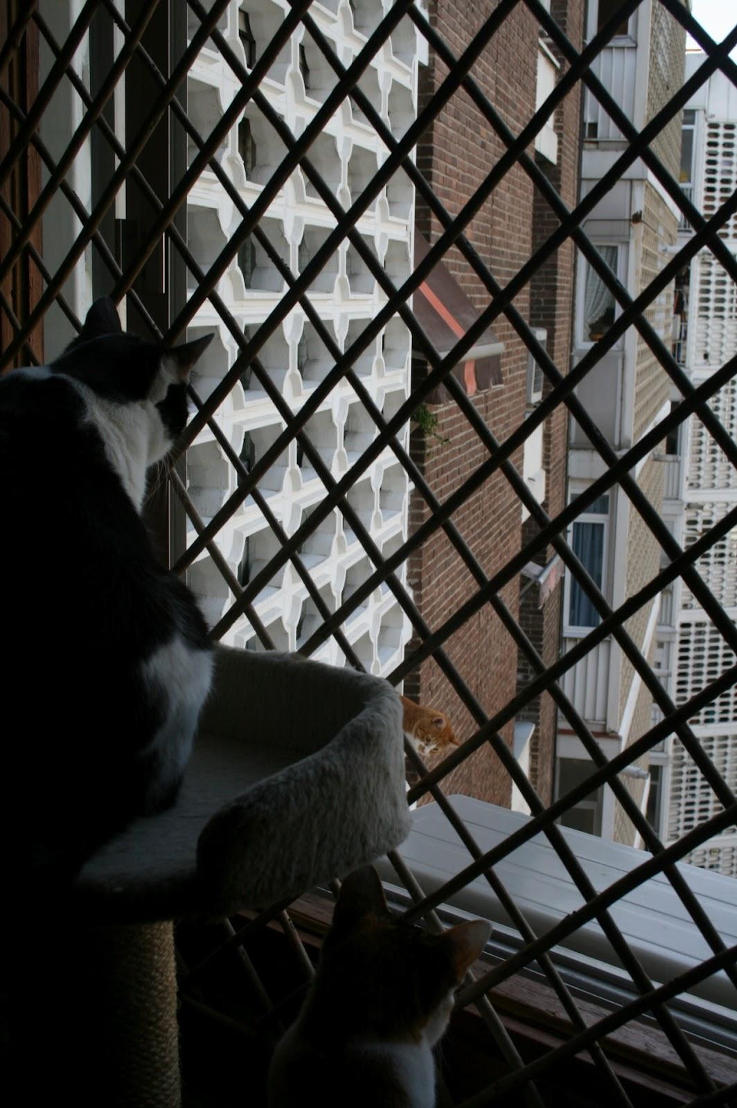 Todo sobre mi gato gatos paracaidistas y soluciones - Celosias de madera leroy merlin ...