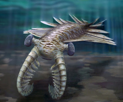 The fearsome meter-long super-predator Anomalocaris. CREDIT: Katrina Kenny & University of Adelaide