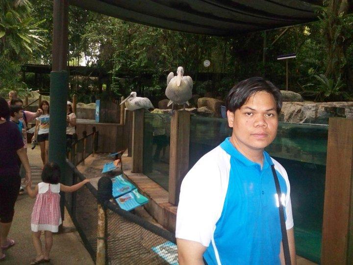 Singapore Zoo Splash Safari Pelican