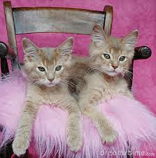 CATVENT CALENDAR: 2 DAYS TO GO UNTIL OUR NEW ASSISTANTS ARRIVE!