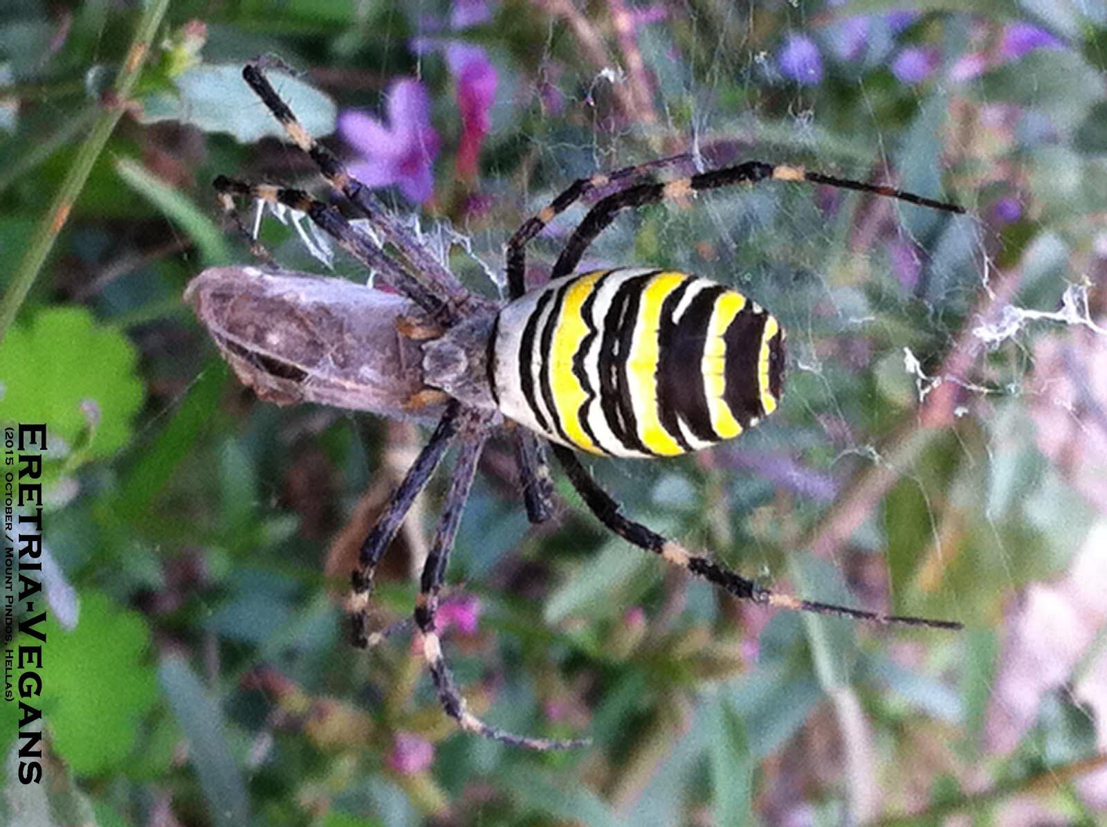 Ελλάδα - Φύση - Βιοποικιλότητα!