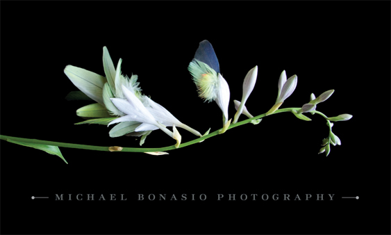 business card | Michael Bonasio Photography