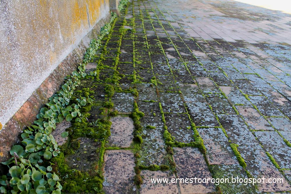 Problemas de eflorescencias en suelos de ladrilleta