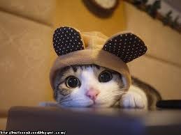 Cat ridiculous