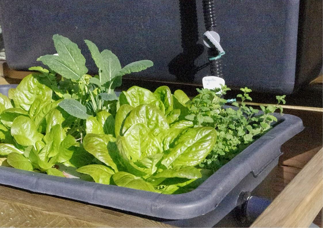 aquaponie B.ponics exterieur raft salade kale menthe fraise aquaponie france diy aquaponics