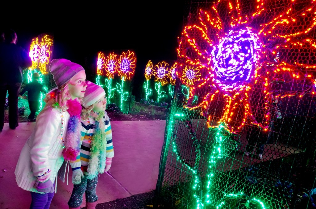Plant To Plate Garden Lights Holiday Nights