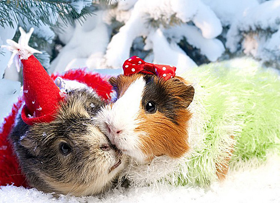 Christmas animals wallpaper for Christmas pictures of baby animals