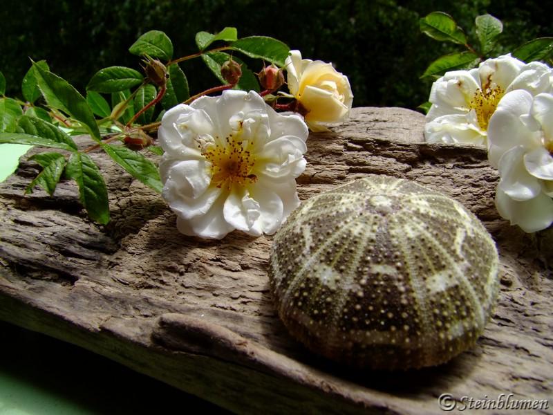 Tischdeko weiße Ramblerrose