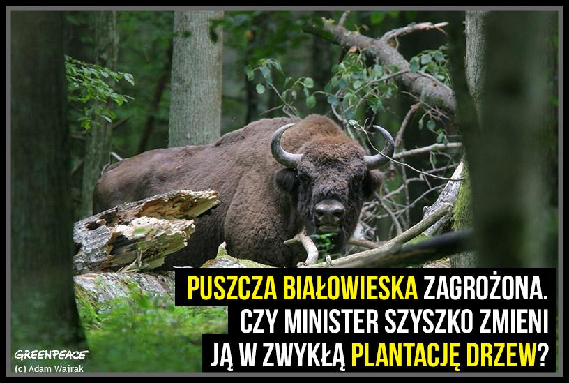 Król Puszczy nie trofeum !