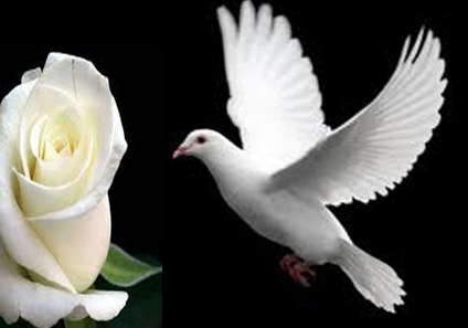 Burung Merpati Putih