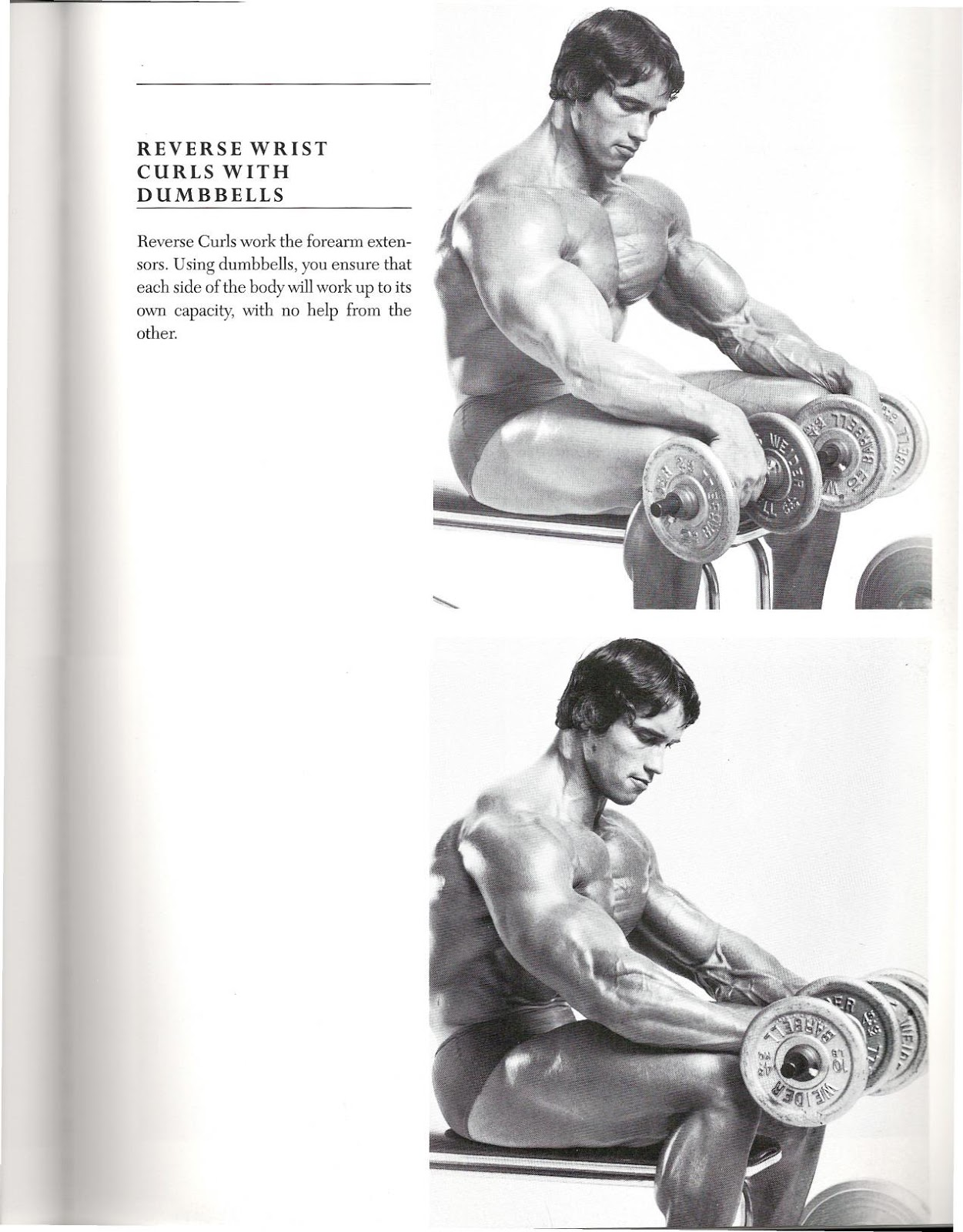 Arnold schwarzenegger bodybuilding book pdf tips for life 005g malvernweather Images