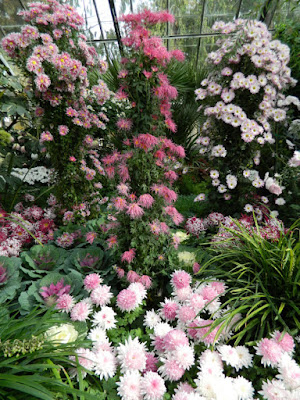 Allan Gardens Conservatory 2015 Chrysanthemum Show mum standards by garden muses-not another Toronto gardening blog