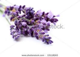 Kisahku & Lavender