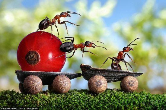 Il mondo in un giardino rimedi naturali anti formiche - Rimedi per le formiche in casa ...