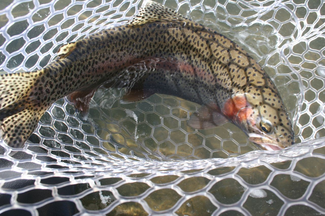 Durango southwest colorado fishing february 2012 for Durango fish hatchery