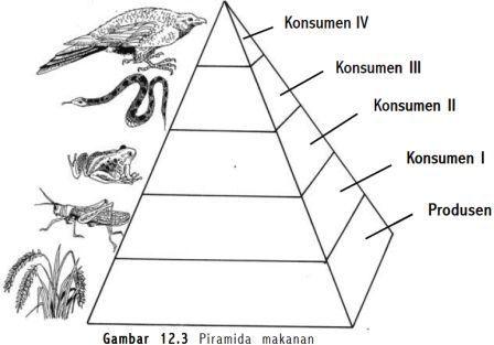 Gambar dan penjelasan piramida rantai dan jaring makanan freewaremini ccuart Images