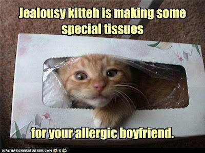 Cat in a Kleenex box. Jealousy kitteh is making some special tissues for your allergic boyfriend.