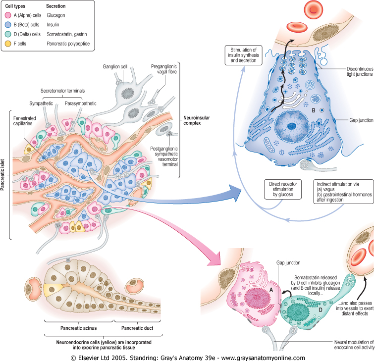 science for life: Adrenal Glands, Pancreas and Local Hormones.